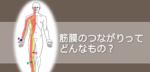 【eyecatch】筋膜のつながりについて